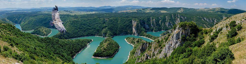 Río Uvac, meandros y buitre leonado